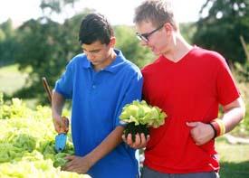 Zwei Schüler stehen an einem Hochbeet und pflanzen Salat-Setzlinge um.