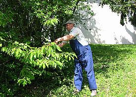 Ein Mann arbeitet im Garten und schneidet einen Busch zurück.